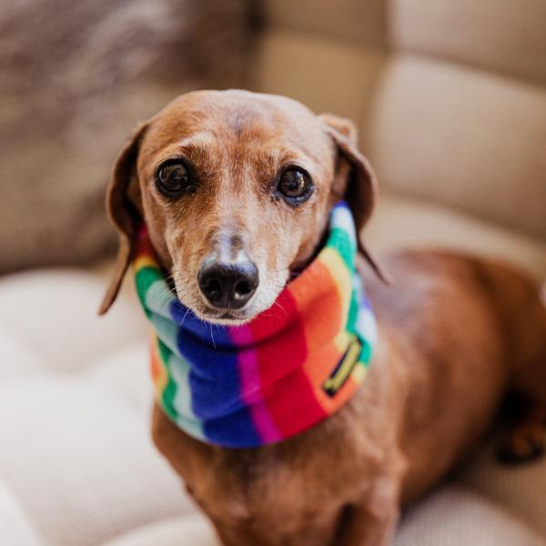 Distinguished Doggie Scarves