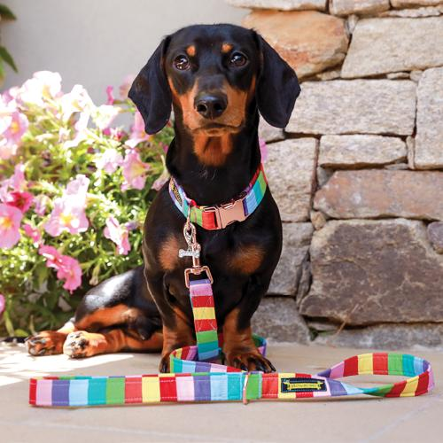 Luxury Collar and Lead sets