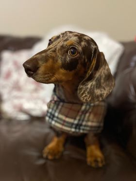 Burberry Tartan Long Dog Cape