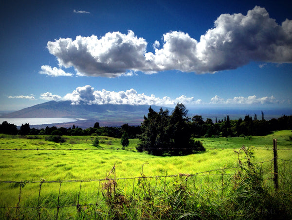 Maui-upcountry-Coffee.image2