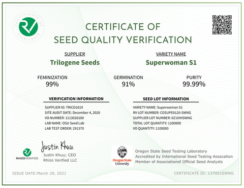 Superwoman S1 | Verified Feminized CBD Seeds