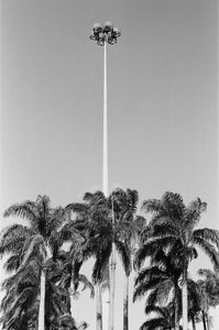 """Palm Trees"" by Henriette Philippa Fee Seibert"