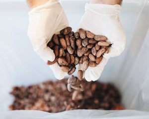 Cacao Roasting Seminar with John Nanci of Chocolate Alchemy