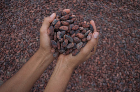 cacao love
