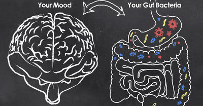 The gut-brain connection - is it possible to achieve higher brain function by treating your gut?