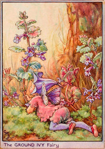 Fairytale & Folklore Stickers - Cecily Mary Barker's Flower Fairies: Winter Aconite, Rose, Ground Ivy, Cherry Tree