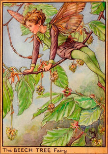 Fairytale & Folklore Stickers - Cecily Mary Barker's Flower Fairies: Beech Tree, Sweet Chestnut, Alder Tree, Winter Jasmine