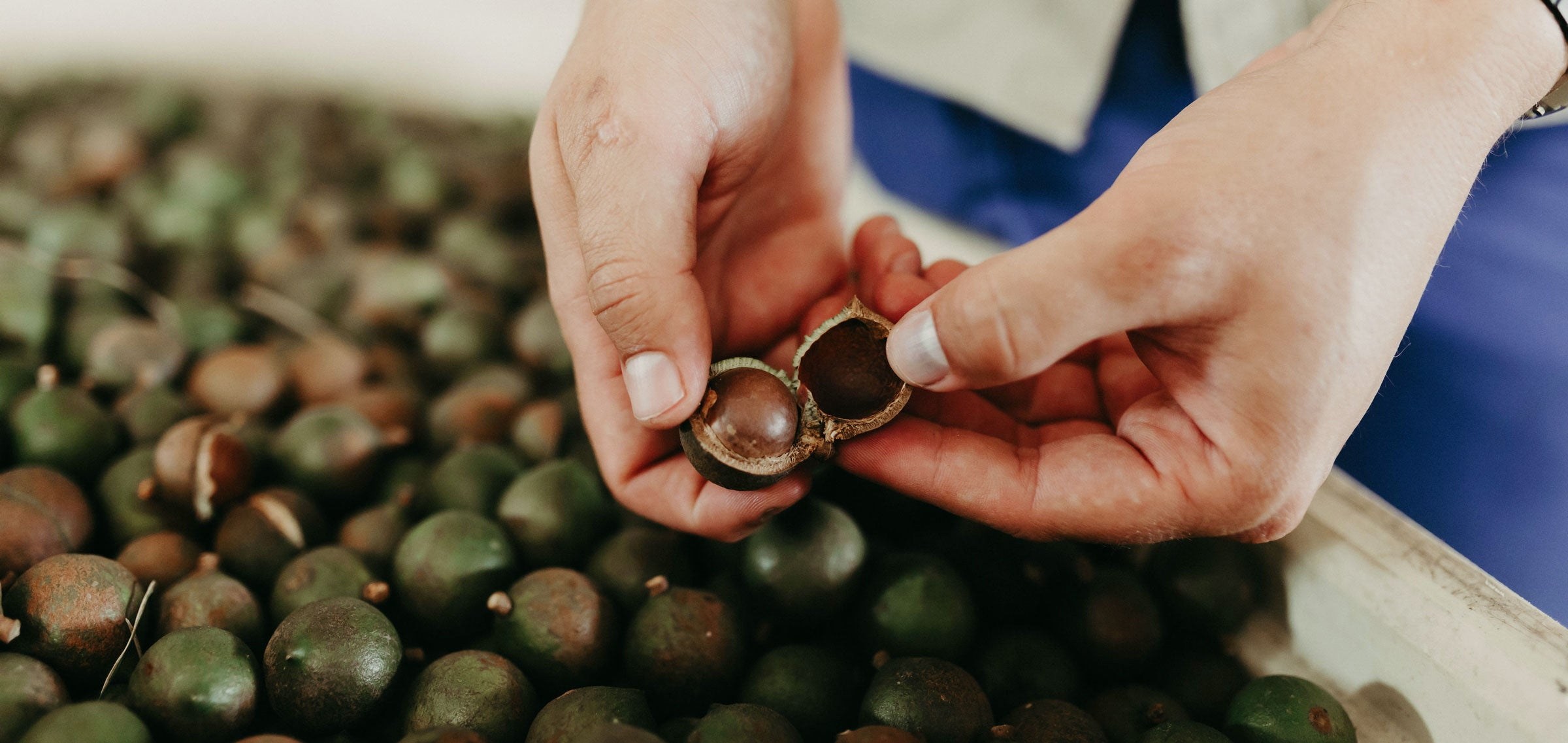 Maison Macolat Single Origin Macadamia Nuts from South Africa. The highest grade of Macadamia Nuts