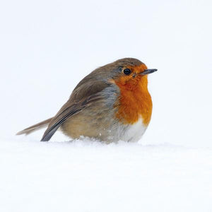 The Art File Charity Christmas Cards - 4 Boxes Of 6 Robin