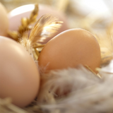 Creswick Farm's Eggs Lying Among Feathers And Straw