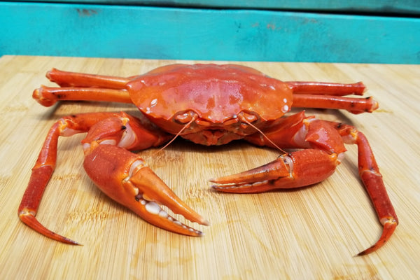 live red crab