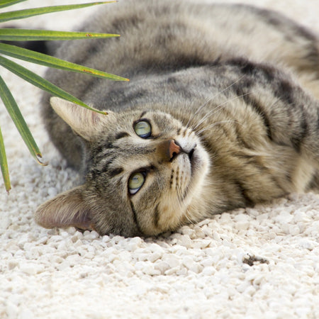 Pet Remedies - Cat care & well being