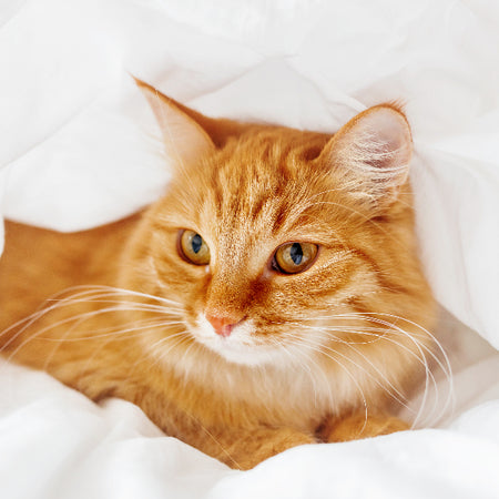 Pet Remedies - Cat medication