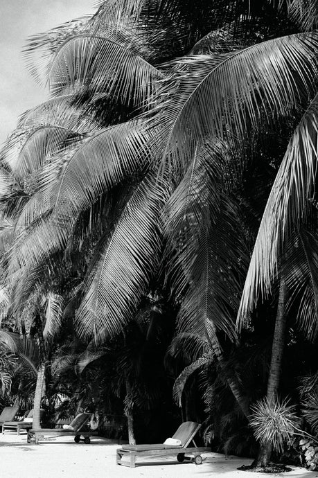 Framed Art Palm Tree Islamorada Florida