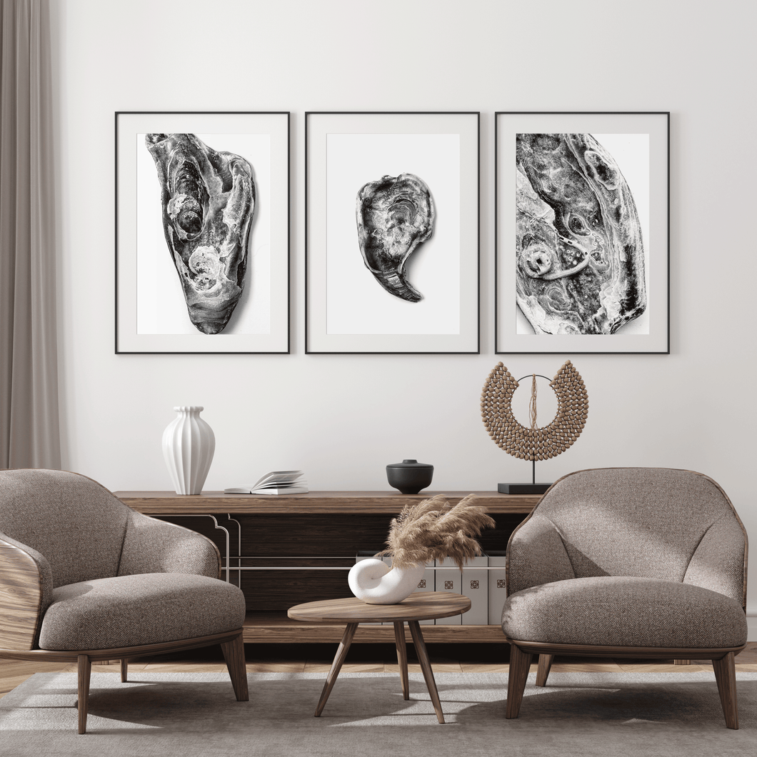 Framed Art Print Shells black and white
