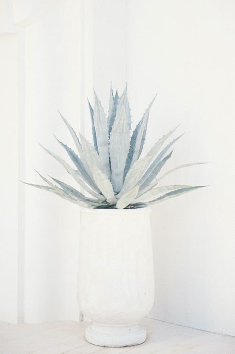 Framed Art Agave