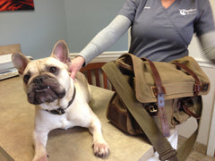 Dozer at Prytania Veterinarian