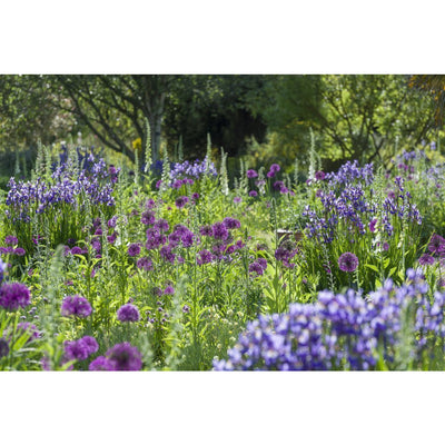 100% cotton tea towel featuring blue and purple flowers of the Bee Border at Cambridge University Botanic Garden. Brought to you by CuratingCambridge.co.uk