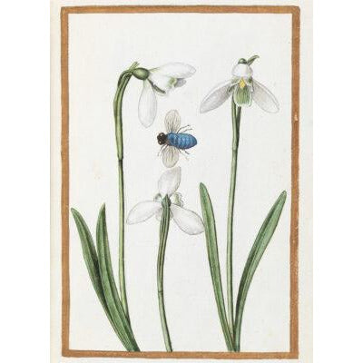 Greeting card - Snowdrops with a Blue Bottle by Antoine du Pinet. From the collection of The Fitzwilliam Museum, brought to you by CuratingCambridge.com