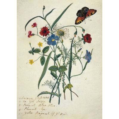 Greeting card - Flowers of the field by Mary Forbes, including red vetch, blue flax, and a white daisy, with a tortoiseshell butterfly. From the Broughton collection of The Fitzwilliam Museum, brought to you by CuratingCambridge.com