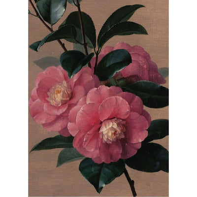 Greeting card - Pink Camellia study by Paul de Longpre. From the Broughton Collection of The Fitzwilliam Museum, brought to you by CuratingCambridge.com