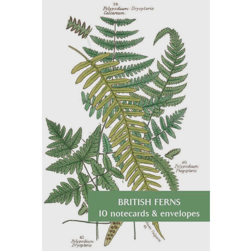 Featured image for the project: British Ferns - Notecard pack