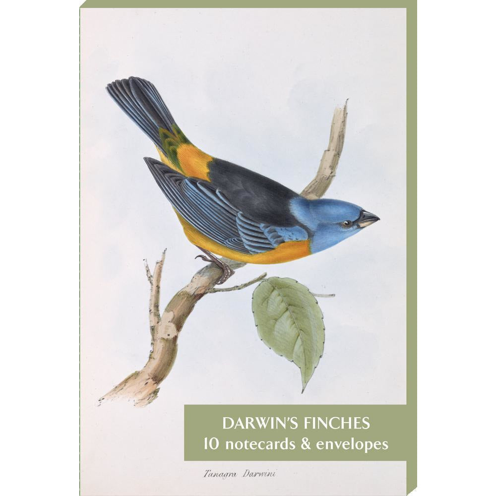 Featured image for the project: Darwin's Finches - Notecard pack