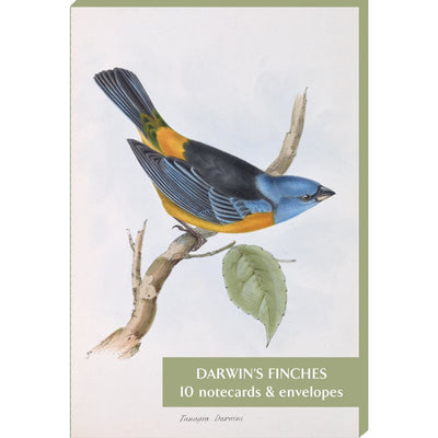 Notecard pack - Darwin's finches, from Zoology of the HMS Beagle, part 3: Birds. Illustrated by Elizabeth Gould. Cover image - Tanagra darwini. From the collection of Cambridge University Library, brought to you by CuratingCambridge.co.uk