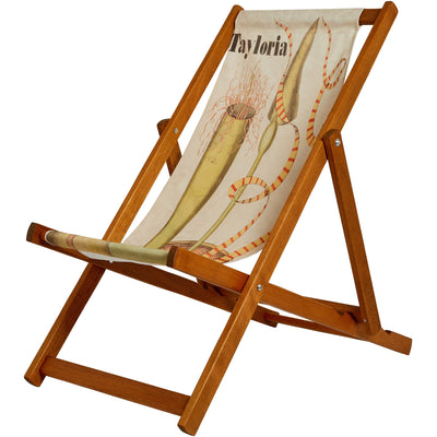 Deckchair with illustration of Tayloria by John Stevens Henslow. From the collection of the Whipple Museum of the History of Science, brought to you by CuratingCambridge.com