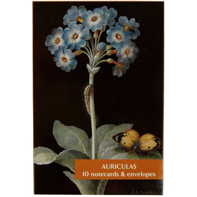 Notecard pack - Auriculas. Cover image Primula auricula by Barbara Dietzsch. From the Broughton Collection of the Fitzwilliam Museum, brought to you by CuratingCambridge.