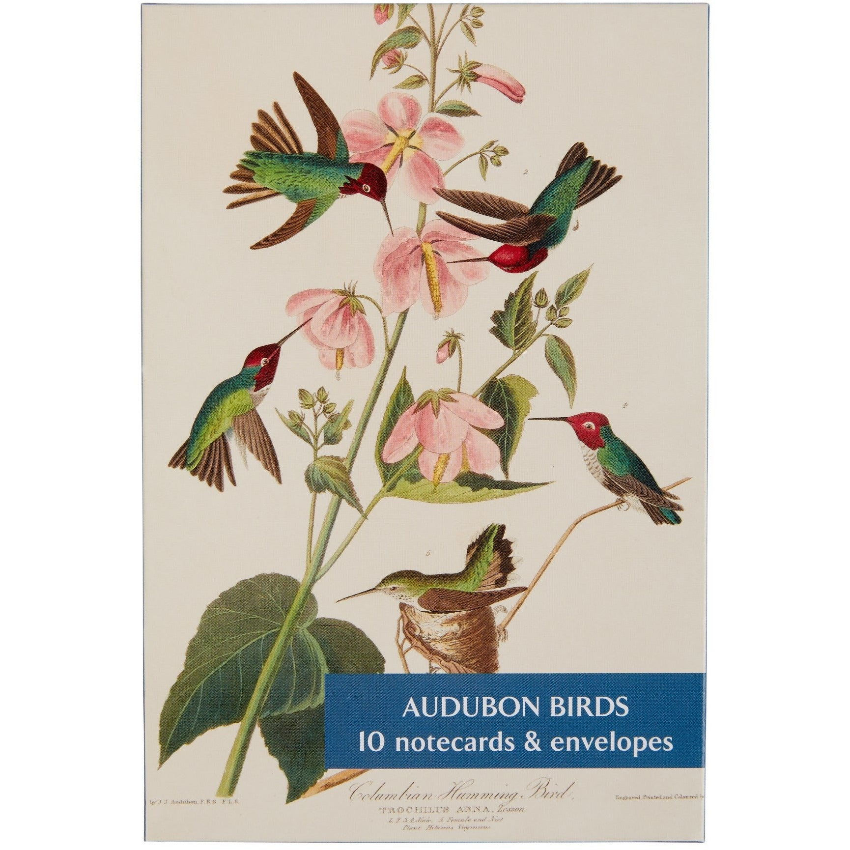 Featured image for the project: Audubon Birds - Notecard pack