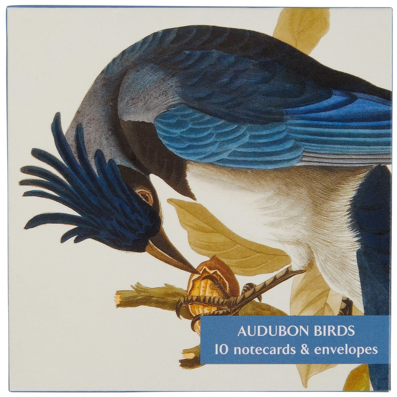 Featured image for the project: Audubon Birds - Notecard pack (small)