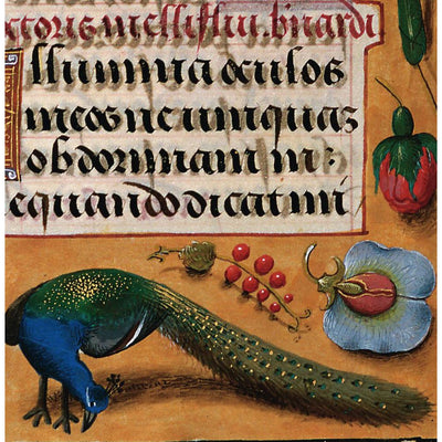 Square greeting card - peacock with tail down, pecking at the ground under calligraphy text. From the illuminated manuscript collection of The Fitzwilliam Museum, brought to you by CuratingCambridge.com