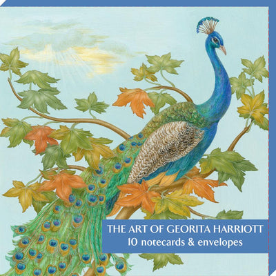 Notecard pack - illustrations from nature by local Cambridge artist Georita Harriott. Cover image - male Indian peacock. From the Cambridge University Botanic Garden and the Museum of Zoology. Brought to you by CuratingCambridge.co.uk