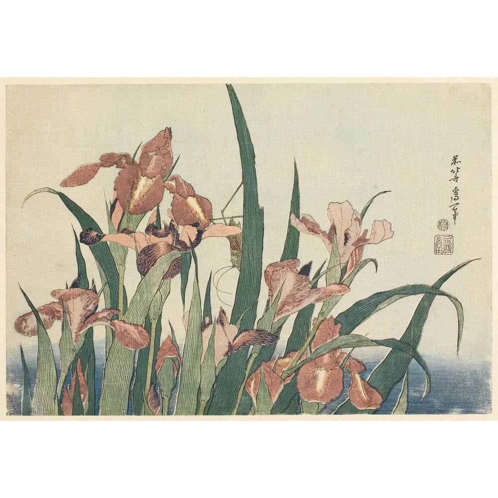 Featured image for the project: Irises and grasshopper - Art print