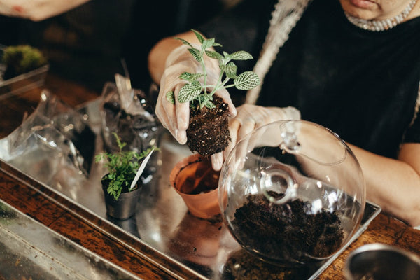 Terrarium Workshop at UBB Walnut - 4/27