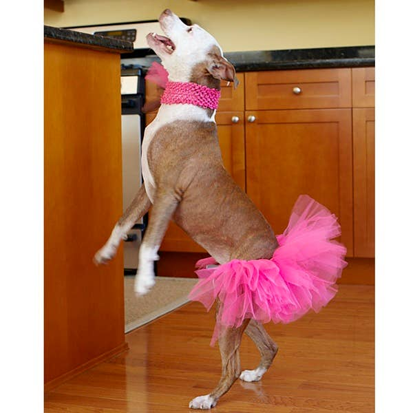 Dog Park Publishing - Hot Pink Dog Tutu for Large Dogs