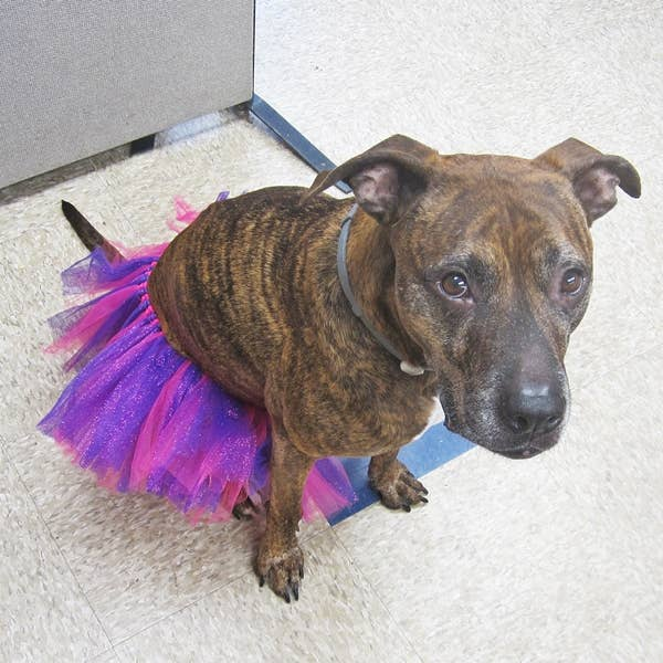 Dog Park Publishing - Pink and Purple Dog Tutu for Large Dogs