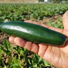 Load image into Gallery viewer, Zucchini - Italian Green