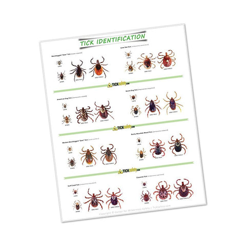 Tick Identification Poster Poster TickSafety.com