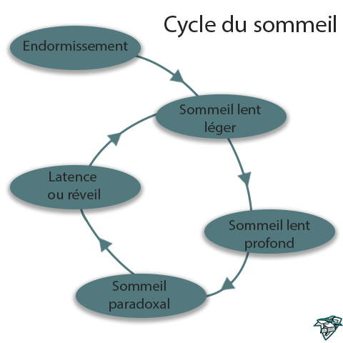Cycle du sommeil