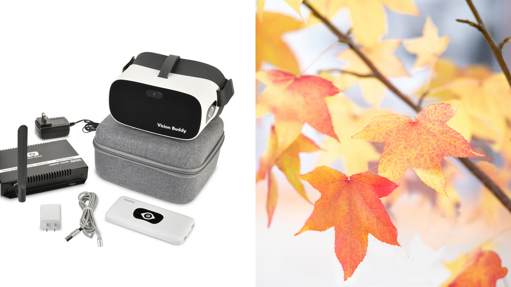 Enjoy Autumn with Better Sight. Vision Buddy is Here to Help!