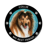 Collie My Best Friend Dog Breed Magnet