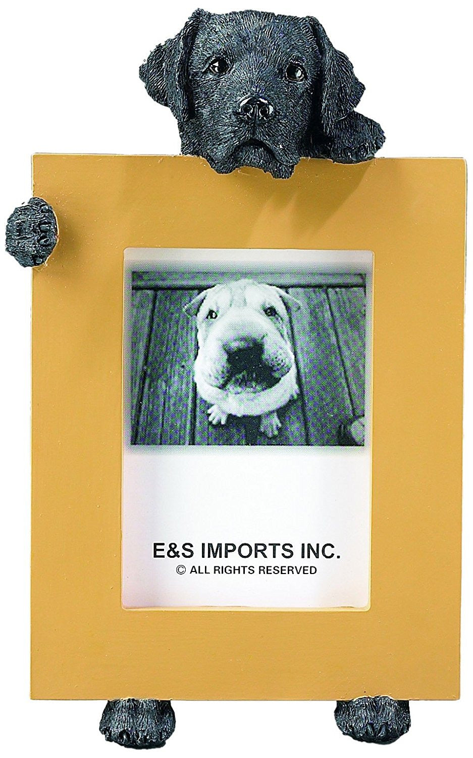 Labrador Black Dog Holding Picture Frame