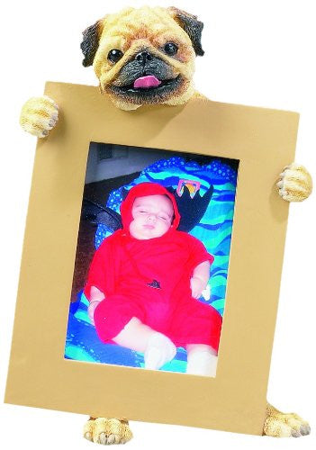 Pug Fawn Dog Holding Picture Frame