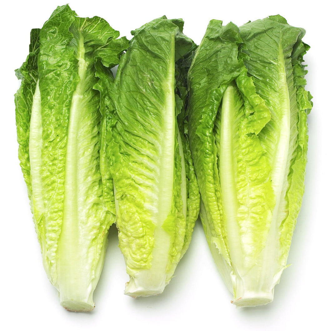 1 x Pack of 3 Romaine Hearts