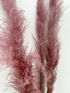 Large Fluffy Pink Pampas