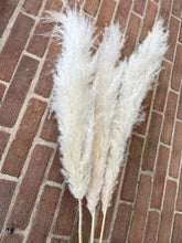 Load image into Gallery viewer, Ivory Fluffy Pampas