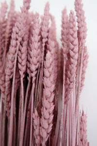 Pink Misty Wheat