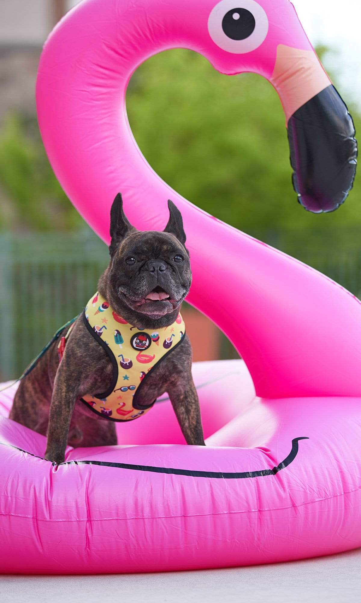 Dog Reversible Harness - Pool Party Style